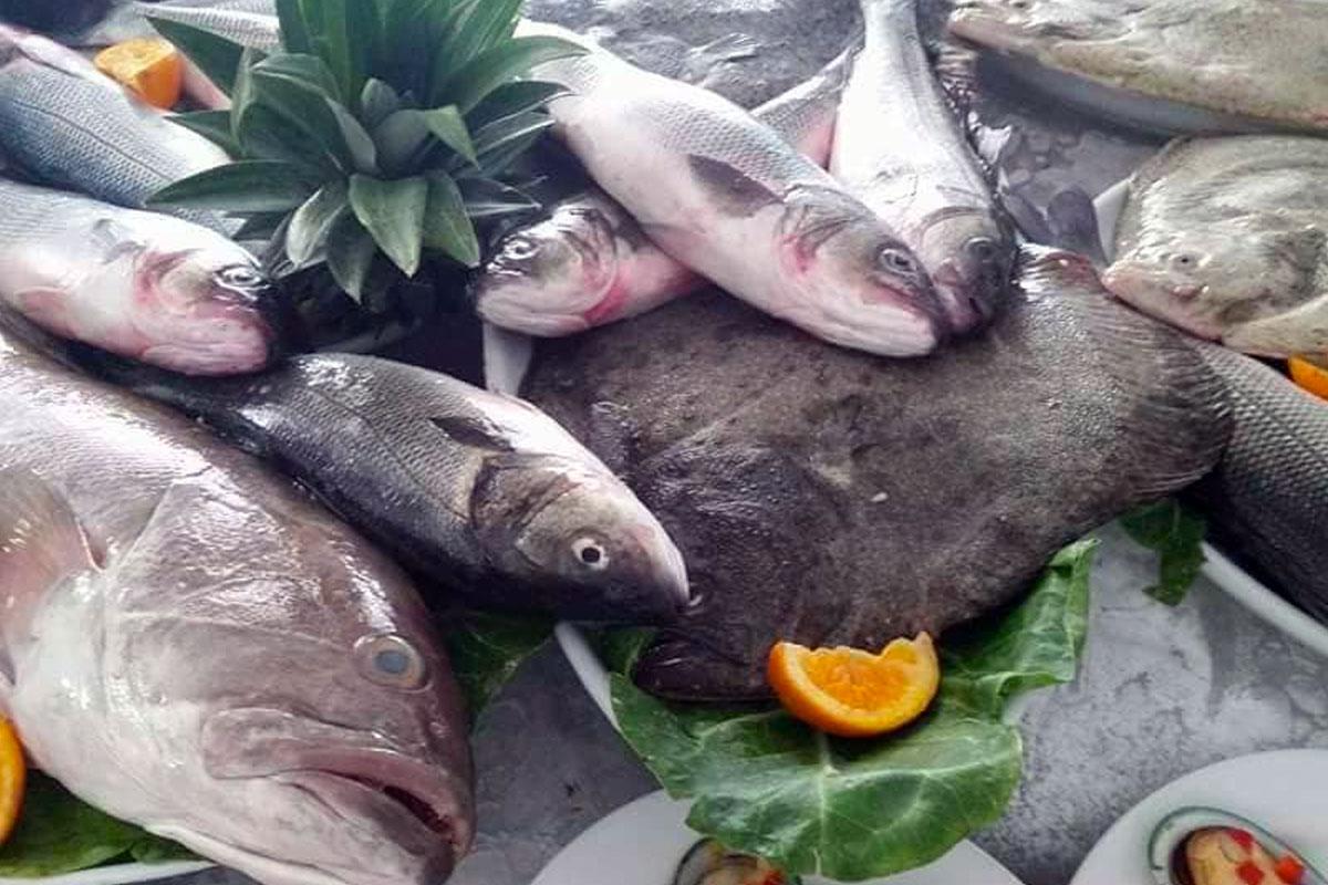 Seleção de Peixe Fresco